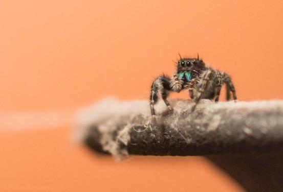 little-spider_t20_vjlRZz (1)